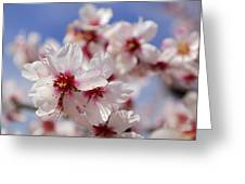 White Spring Almond Flowers Greeting Card