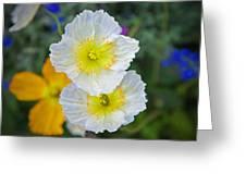 White Spring Greeting Card