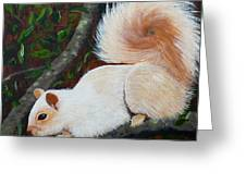 White Squirrel Of Sooke Greeting Card