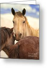 White Stallion Wild Horses On Navajo Indian Reservation  Greeting Card