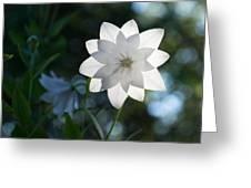 White Star Greeting Card