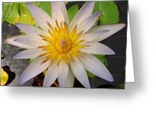 White Star Lotus Greeting Card