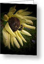 White Sunflower And Bee Greeting Card