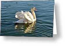 White Swan At Sunset Greeting Card