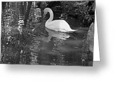 White Swan In Black And White II Greeting Card