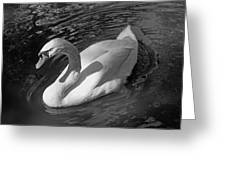White Swan In Black And White Greeting Card