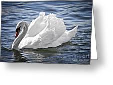 White Swan On Water Greeting Card
