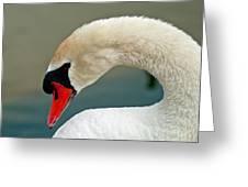 White Swan Profile Greeting Card