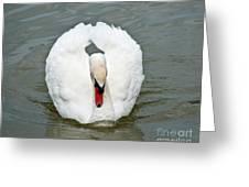 White Swan Swimming Greeting Card