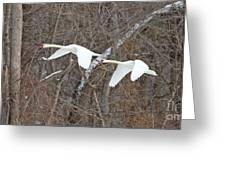 White Swans In Flight 1589 Greeting Card