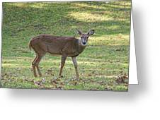 White Tail Deer Greeting Card