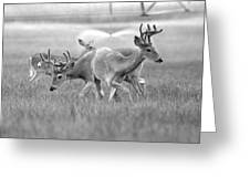 White Tail Shower Greeting Card