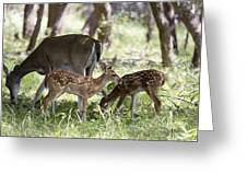White-tail Twins Portrait Greeting Card by Dana Moyer