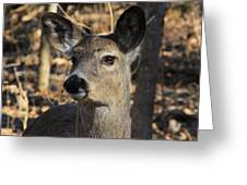 White Tailed Deer 1 Greeting Card