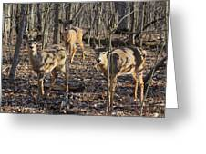 White Tailed Deer 2 Greeting Card