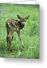 White-tailed Deer Fawn Meadow Greeting Card