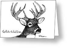White-tailed Deer Head Greeting Card