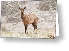 White Tailed Deer In Snow Greeting Card