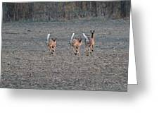 White Tailed Deer Running Greeting Card