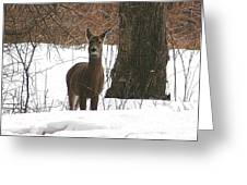 White-tailed Winter Stand  Greeting Card