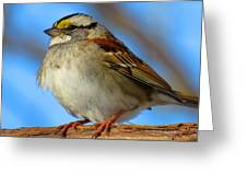 White Throated Sparrow And Blue Sky Greeting Card