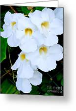 White Thunbergia On The Fence Greeting Card