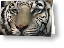 White Tiger - Up Close And Personal Greeting Card