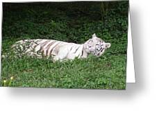 White Tiger 2 Greeting Card