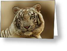 White Tiger II Greeting Card