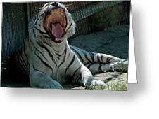 White Tiger Reno Nv 3 Greeting Card