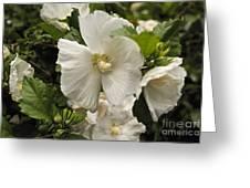 White Tree Flower Greeting Card