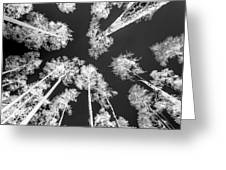 White Trees Greeting Card
