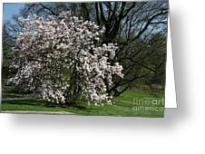 White Tulip Tree Greeting Card