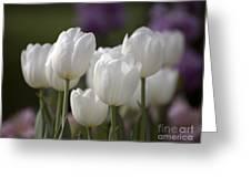 White Tulips 9169 Greeting Card
