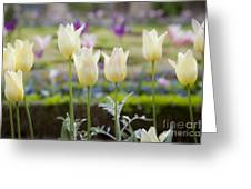 White Tulips In Parisian Garden Greeting Card