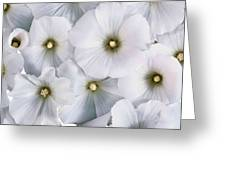 White Violets Greeting Card