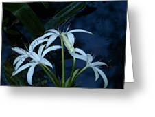 White Water Flower Greeting Card
