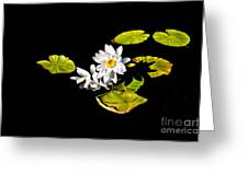 White Water Lilies Greeting Card