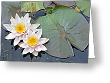 White Water Lilies Netherlands Greeting Card by Jelger Herder