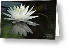 White Water Lily Reflections Greeting Card