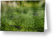 White Water Preserve Greeting Card