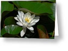 White Waterlily Lotus Greeting Card