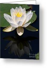 White Waterlily Reflection Greeting Card