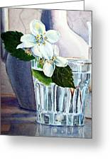 White White Jasmine  Greeting Card