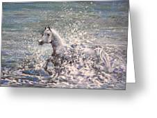 White Wild Horse Greeting Card