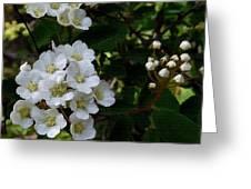 White Wildflowers Greeting Card
