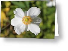 White Windflower Greeting Card