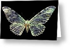 White Witch Moth Greeting Card