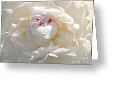 White With Red Peony Greeting Card