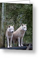 White Wolf Pair Greeting Card